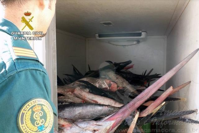 Fiscalizacao apreende 1.500kg de espadarte pescados ilegalmente na Espanha 3
