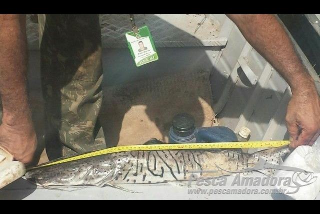 Fiscalizacao apreende 22,6 kg de pescado irregular no Rio Culuene-MT