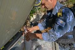 Fiscalizacao apreende mais de 10 toneladas de peixes em Palmas-TO 2