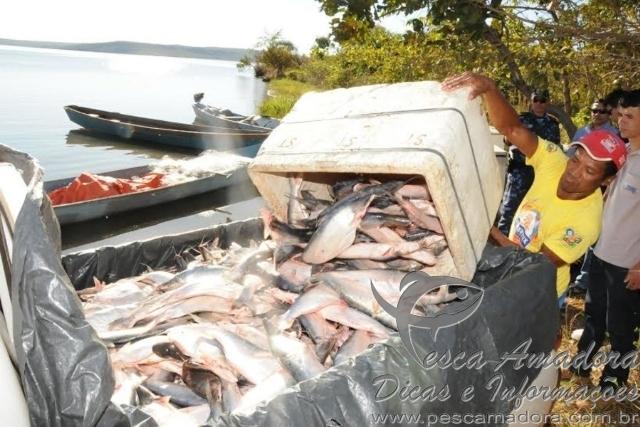 Fiscalizacao apreende mais de 10 toneladas de peixes em Palmas-TO 3