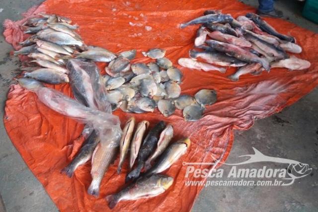 Fiscalizacao apreendeu 3,3 toneladas de pescado ilegal desde janeiro no Mato Grosso