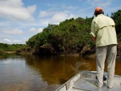 Fly no Pantanal