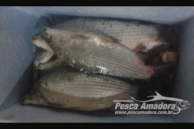 Forca Verde apreende pescado ilegal e rede de pesca no Rio Ariranha-PR 2