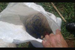 Forca Verde apreende pescado ilegal e rede de pesca no Rio Ariranha-PR