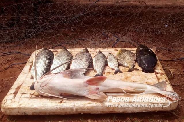 forca-verde-de-umuarama-prende-tres-homens-por-pesca-predatoria-no-rio-parana-2