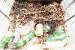 Forca Verde recolhe 450 m de espinheis no Rio Tibagi-PR