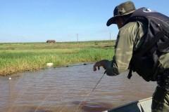 Forca Verde recolhe redes e tarrafas ilegais no Rio Tibagi no PR 2