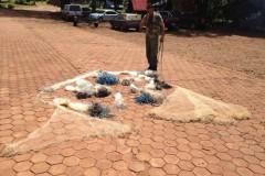 Forca Verde recolhe redes e tarrafas ilegais no Rio Tibagi no PR 3