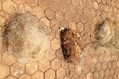 Forca Verde recolhe redes e tarrafas ilegais no Rio Tibagi no PR 5