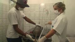 Golfinhos sao examinados por Ong em Peruibe-SP
