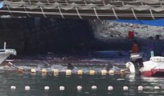 Golfinhos na rede de pesca se debatendo. Ao fundo a água já vermelha de sangue (Foto: Adrian Mylne/Reuters)