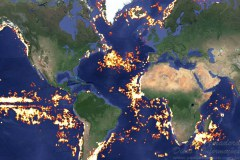 Google vai monitorar pesca ilegal