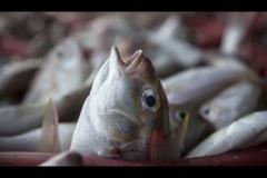 Havera mais peixes ou plastico nos oceanos em 2050 2