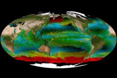Havera mais peixes ou plastico nos oceanos em 2050 3