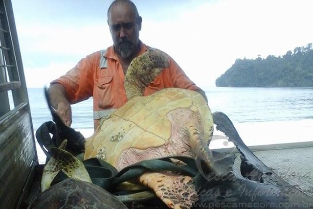 Homem compra tartarugas em mercado e as devolve ao mar na Guine