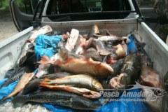 Homem e preso com 141 kg de pescado ilegal no Rio Paraguai-MS