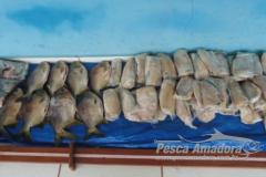 Homem e preso com 36 kg de pescado ilegal e multado em R$ 2.720,00 no MS