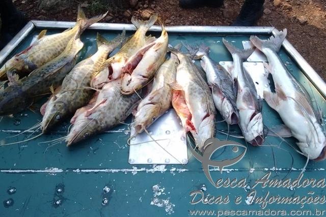 Homem e preso por pesca predatoria em Alvorada do Sul-PR 3