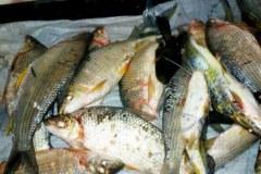 Homem e preso por pesca predatoria no Rio da Prata-MG 2