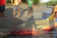 Homem recebe multa no valor de 30 mil reais por abater peixe serra no maranhao