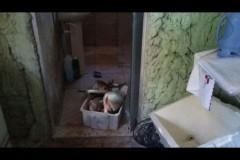 Homem tranca peixes em banheiro e foge da Policia Ambiental em Valparaiso-SP 2