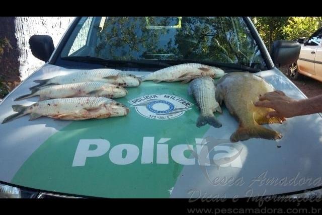 Homem tranca peixes em banheiro e foge da Policia Ambiental em Valparaiso-SP
