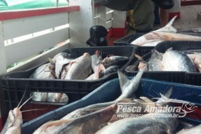 icmbio-apreende-2-5-toneladas-de-pescado-ilegal-em-santarem-pa-2