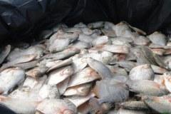 ICMBio apreende barco com quase 4 toneladas de pescado ilegal em reserva no AM