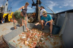 ICMBio divulga analise de contaminacao em peixes e crustaceos no Rio Doce 2