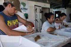 ICMBio divulga analise de contaminacao em peixes e crustaceos no Rio Doce