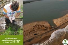 ICMBio divulga analise de contaminacao em peixes e crustaceos no Rio Doce 3