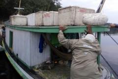 IPAAM apreende 1.300 kg de tucunares pescados ilegalmente em Barcelos-AM