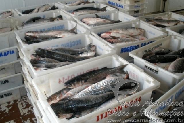 Ibama apreende mais de 18tn de pescado em Santa Catarina