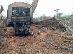 Ibama cessa desmatamento no MT 2