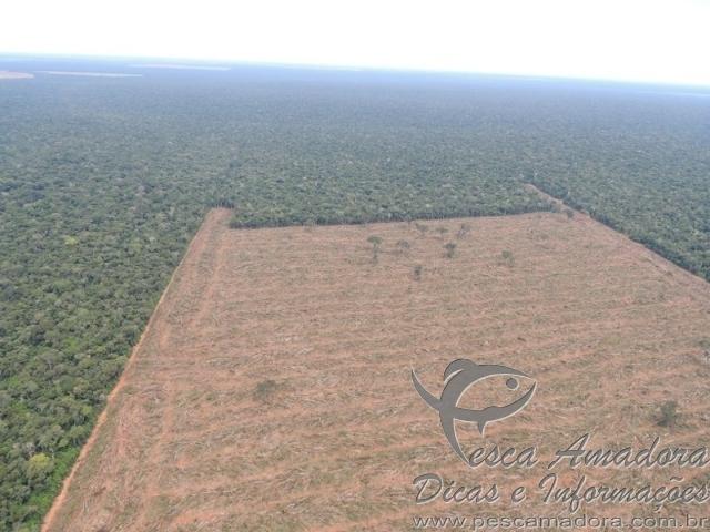 Ibama cessa desmatamento no MT