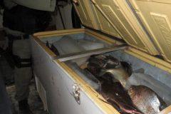 Ibama combate pesca ilegal e apreende 700kg de pescado em Altamira-PA