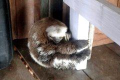ibama-multa-empresas-de-turismo-no-amazonas-por-exploracao-ilegal-de-animais-silvestres-2