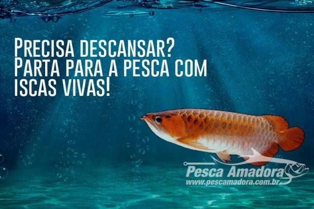Insetos sao excelentes opcoes de isca viva na pesca esportiva capa