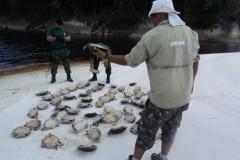 Ipaam aplica R$ 130.890 mil em multas e apreende mais de 152 kg de pescado ilegal em Barcelos-AM