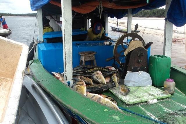 Ipaam aplica R$ 130.890 mil em multas e apreende mais de 152 kg de pescado ilegal em  Barcelos-AM 3