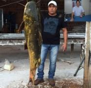 Jau de 60kg abatido no Mato Grosso do Sul