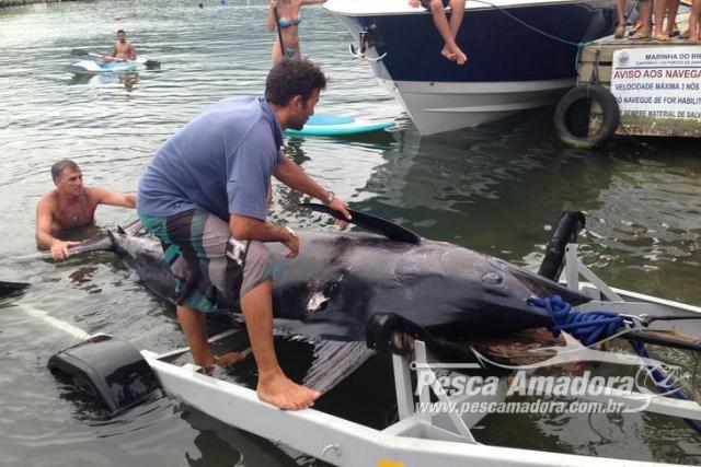 Justica Federal mantem condenacao de pescadores por abater marlin-azul no litoral catarinense em 2013 2