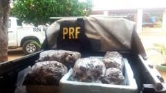 Lagosta apreendida pela PRF no Rio Grande do Norte