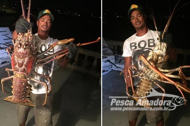 lagosta-gigante-encontrada-apos-passagem-de-furacao-nos-estados-unidos
