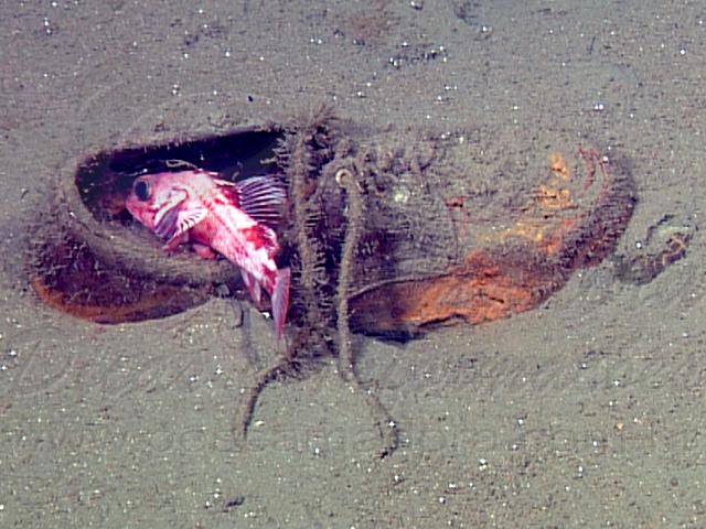 Lixo acumulado no mar da Europa