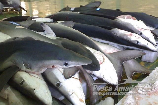 Mantida a proibicao de pesca de 33 especies marinhas ameacadas no RS 2
