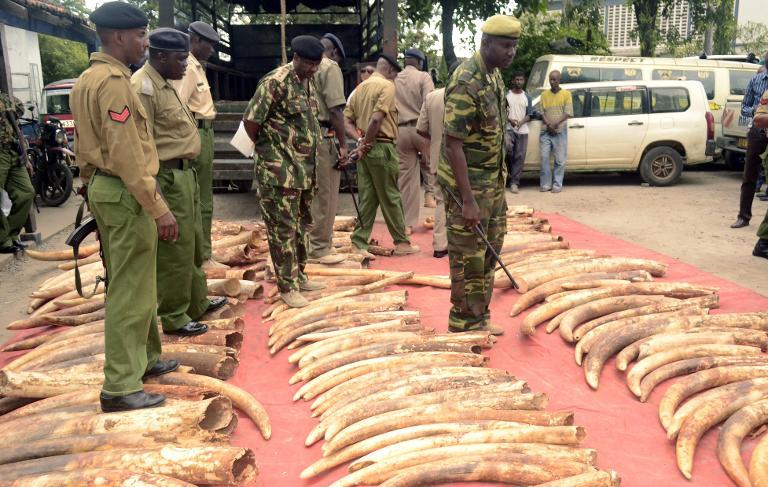 Marfim vendido ilegalmente na Africa