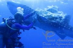 Mergulhador do Seadoors salva tubarao baleia da pesca fantasma nas Filipinas 2