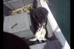 Mergulhador salva tartaruga de rede de pesca em Arraial do Cabo-RJ 2