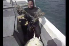 Mergulhador salva tartaruga de rede de pesca em Arraial do Cabo-RJ